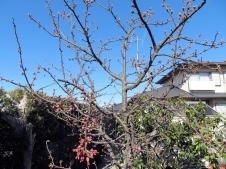 200205sakura5