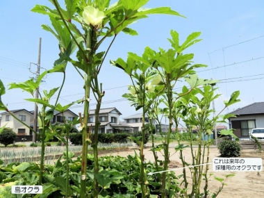 200806shimaokura